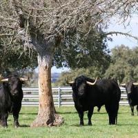 """Hablamos con José Enrique Fraile (Fraile de Valdefresno) """"Me faltará a mí antes la comida que a mis toros""""."""